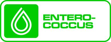 enterococcal contamination